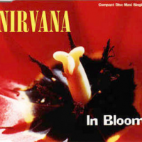 cover single of nirvana in bloom
